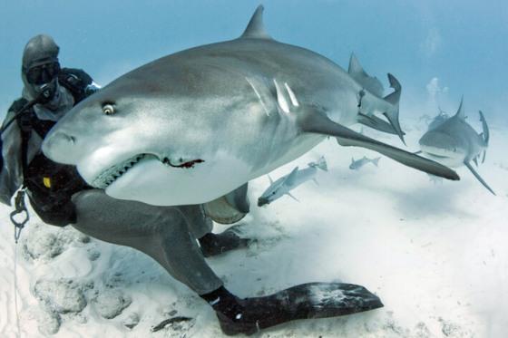 Bull shark attacks – Rebel Voice