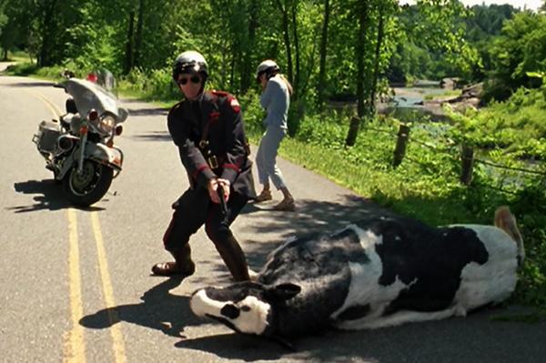 Me Myself And Irene Dead Ish Cow Scene Rebel Voice